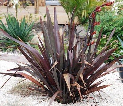 especial de plantas de hojas rojas alicante forestal. Black Bedroom Furniture Sets. Home Design Ideas
