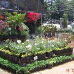 Retail-Nursery-Display